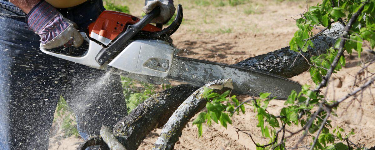 tree service baton rouge la tree removal baton rouge la tree trimming baton rouge la