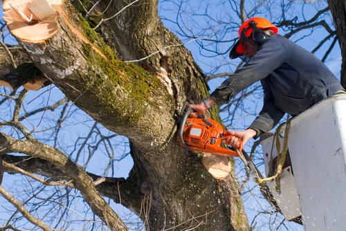tree service baton rouge la